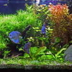 Home Aquariums reduces stress and hypertension